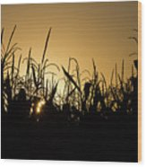Corn Field Sunrise Wood Print