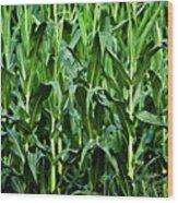Corn Field's First Row Wood Print