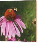 Corn Flower With Bee Wood Print
