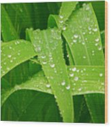 Corn Leaves After The Rain Wood Print