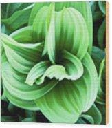 Corn Lily Wood Print by Joe  Palermo