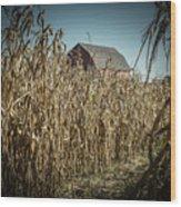 Corn Maze Wood Print