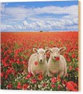 Corn Poppies And Twin Lambs Wood Print