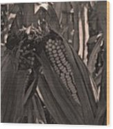 Corn Portrait Wood Print
