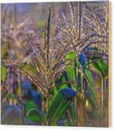 Corn Tassels Wood Print