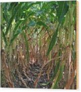 Corn Tunnel Wood Print