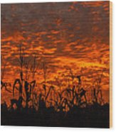 Corn Under A Fiery Sky Wood Print