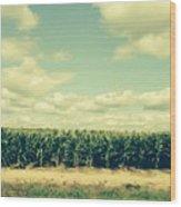 Cornfield In Missouri  Wood Print