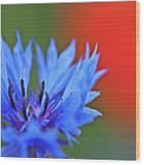 Cornflower Wood Print