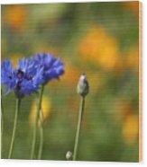 Cornflowers -2- Wood Print