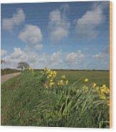 Cornish Daffodil Hedge Wood Print