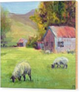 Coromandel New Zealand Sheep Wood Print
