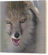 Corsac Fox- Vulpes Corsac 01 Wood Print