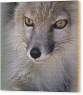 Corsac Fox- Vulpes Corsac 03 Wood Print