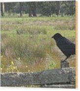 Corvus Wood Print