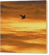 Corvus Silhouette  Wood Print