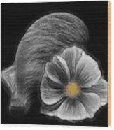 Cosmea Bloom Wood Print
