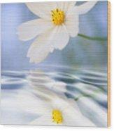 Cosmea Flower - Reflection In Water Wood Print