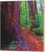 Cosmic Redwood Trail On Mt Tamalpais Wood Print