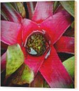 Costa Rica Flower Wood Print