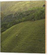 Costa Rica Pasture Wood Print