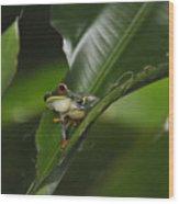 Costa Rica Red Eye Frog I Wood Print