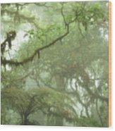 Costa Rican Cloud Forest Wood Print by Matt Tilghman