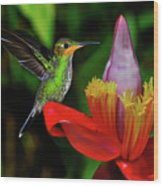 Costa Rican Hummingbird Wood Print