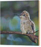 Costa's Hummingbird - Square Wood Print