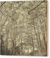 Cosy Path Wood Print