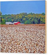 Cotton And The Red Barn Wood Print