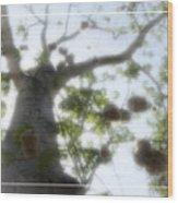 Cotton Ball Tree Wood Print