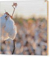 Cotton Field 14 Wood Print