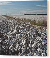 Cotton Field Wood Print