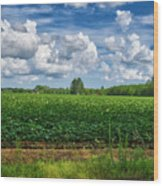 Cotton Fields Of Sc Wood Print