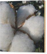 Cotton Pod Open Wood Print