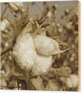 Cotton Sepia Wood Print