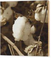 Cotton Sepia2 Wood Print
