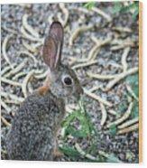 Cottontail Rabbit 4320-080917-1 Wood Print