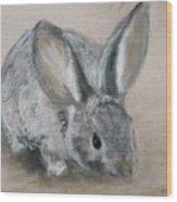 Cottontail Rabbit Wood Print