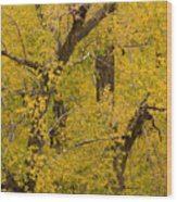 Cottonwood Fall Foliage Colors Wood Print