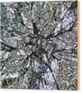 Cottonwood Montage Wood Print