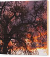 Cottonwood Sunset Silhouette Wood Print