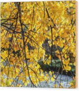 Cottonwood Tree Along The River Wood Print