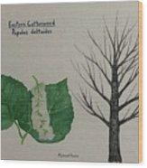 Cottonwood Tree Id Wood Print