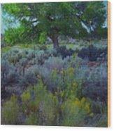 Cottonwood Tree In Old Field Wood Print