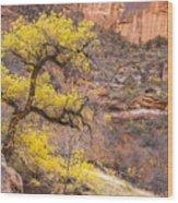 Cottonwood Tree With Vibrant Autumn Colour, Zion National Park, Utah Usa Wood Print