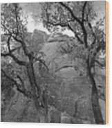 Cottonwood Trees-zion Wood Print