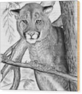 Cougar In Tree Wood Print