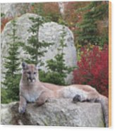 Cougar On Rock Wood Print